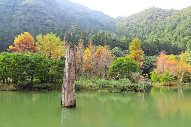 跟著 Mikey 一家去旅行 - 【 大同 】明池國家森林遊樂區 - 秋之明池
