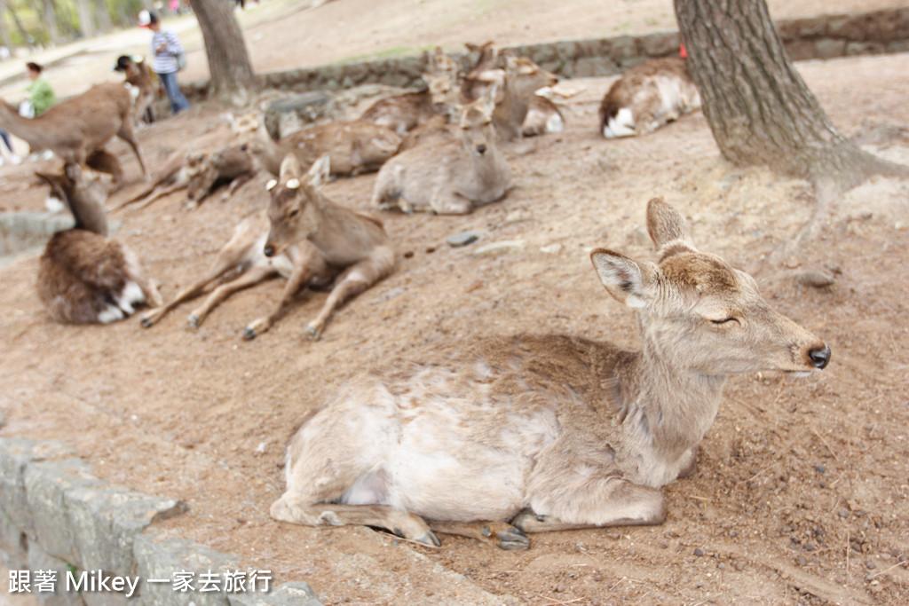 跟著 Mikey 一家去旅行 - 【 奈良 】奈良公園