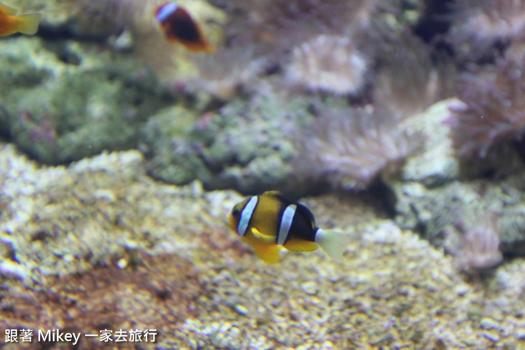 跟著 Mikey 一家去旅行 - 【 馬公 】澎湖水族館 - Part 1
