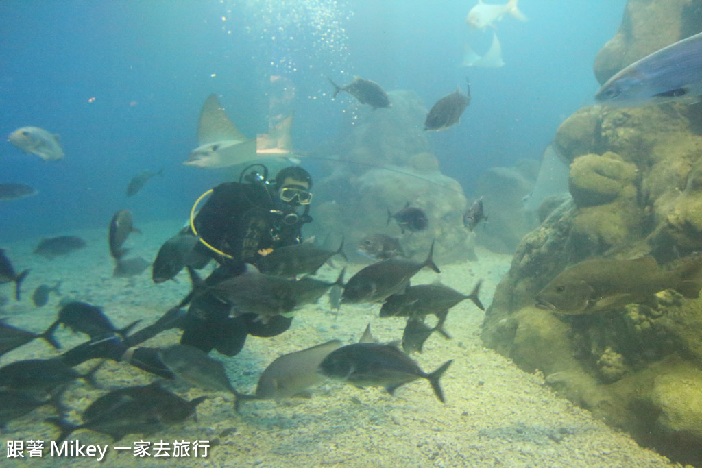 跟著 Mikey 一家去旅行 - 【 馬公 】澎湖水族館 - Part 2