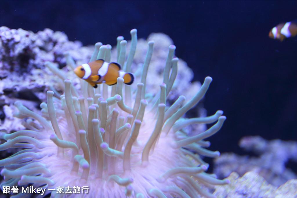 跟著 Mikey 一家去旅行 - 【 馬公 】澎湖水族館 - Part 3