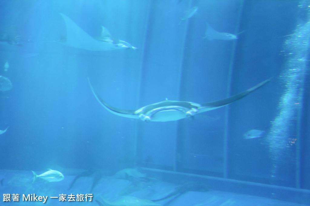 跟著 Mikey 一家去旅行 - 【 沖繩 】 美ら海水族館 - 黑潮之海