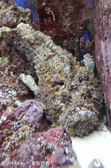 跟著 Mikey 一家去旅行 - 【 沖繩 】 美ら海水族館 - 珊瑚礁之旅