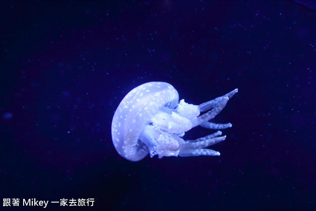 跟著 Mikey 一家去旅行 - 【 沖繩 】 美ら海水族館 - 深海探險區