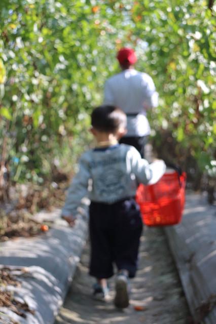 跟著 Mikey 一家去旅行 - 【 美濃 】2013 美濃蕃茄季