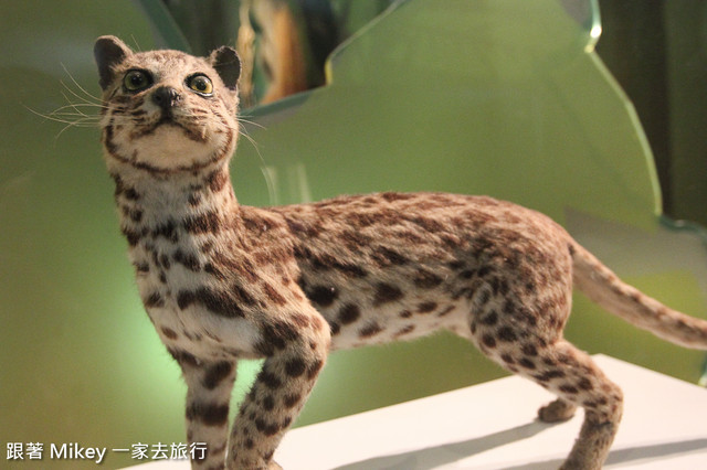 跟著 Mikey 一家去旅行 - 【 台中 】國立自然科學博物館 - 常設展 - 哺乳類的演化與適應