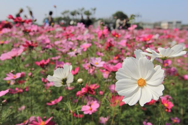 跟著 Mikey 一家去旅行 - 【 田尾 】田尾公路花園