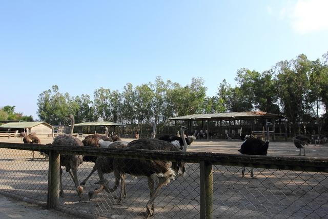 跟著 Mikey 一家去旅行 - 【 學甲 】頑皮世界野生動物園