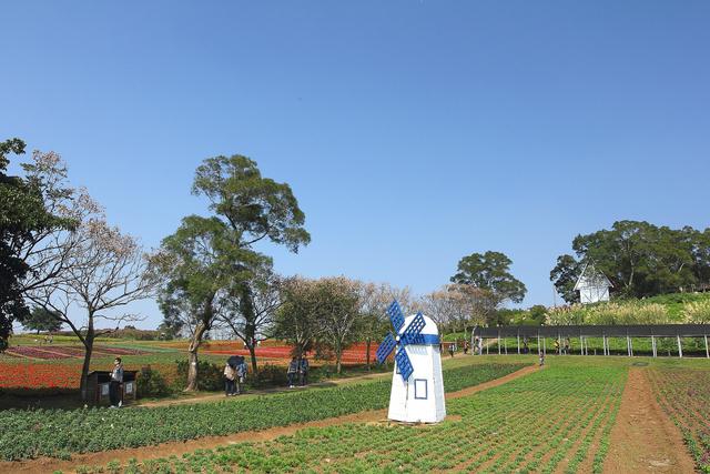 跟著 Mikey 一家去旅行 - 【 大溪 】大溪花海農場