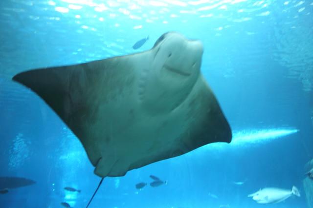 跟著 Mikey 一家去旅行 - 【 車城 】國立海洋生物博物館