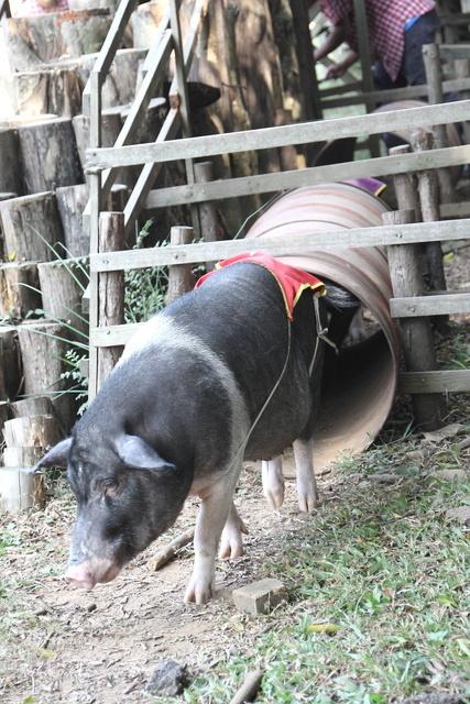 跟著 Mikey 一家去旅行 - 【 楊梅 】味全埔心牧場
