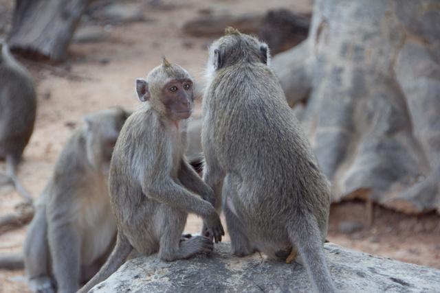 跟著 Mikey 一家去旅行 - 【 新竹 】市立動物園