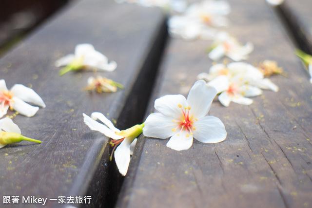 跟著 Mikey 一家去旅行 - 【 土城 】桐花公園 - 花見幸福