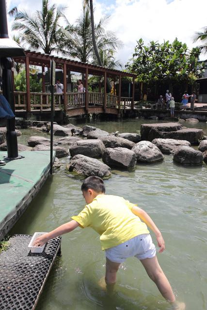 跟著 Mikey 一家去旅行 - 【 壽豐 】立川漁場