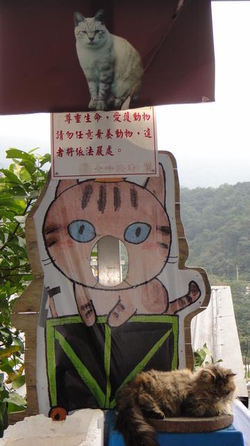 跟著 Mikey 一家去旅行 - 【 瑞芳 】猴硐貓村