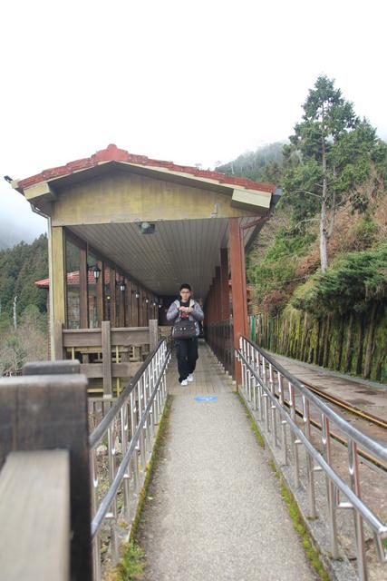 跟著 Mikey 一家去旅行 - 【 宜蘭 】太平山森林遊樂區