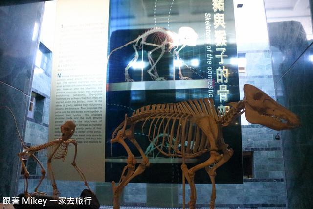 跟著 Mikey 一家去旅行 - 【 台東 】國立臺灣史前文化博物館 - Part III