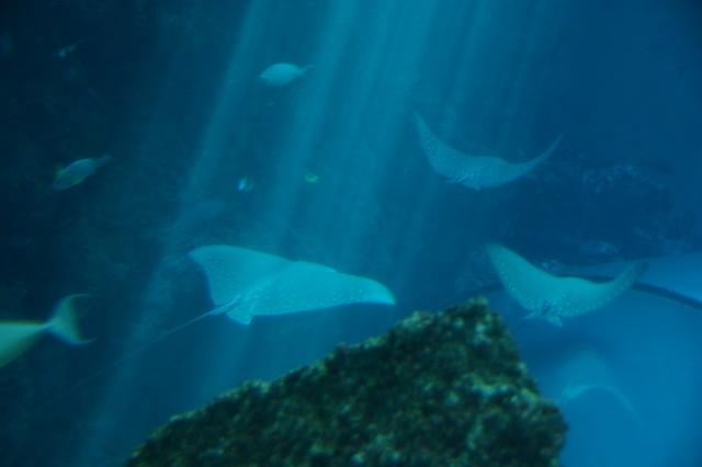 跟著 Mikey 一家去旅行 - 【 車城 】國立海洋生物博物館 - 珊瑚王國館