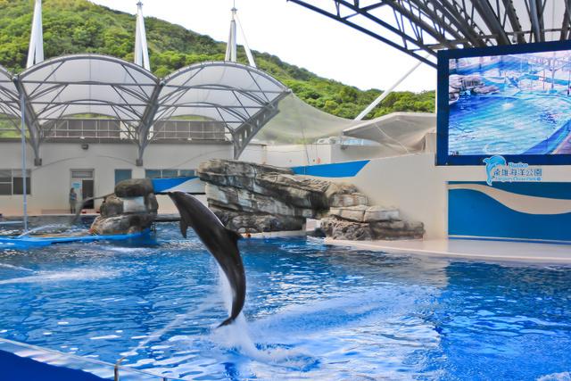 跟著 Mikey 一家去旅行 - 【 壽豐 】花蓮遠雄海洋公園 - 海獅海豚表演篇