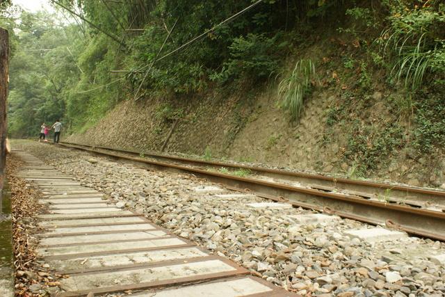 跟著 Mikey 一家去旅行 - 【 集集 】綠色隧道 & 龍泉車站