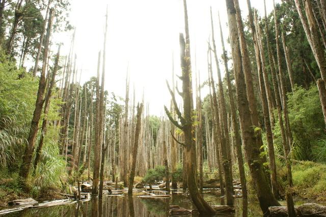 跟著 Mikey 一家去旅行 - 【 竹山 】忘憂森林