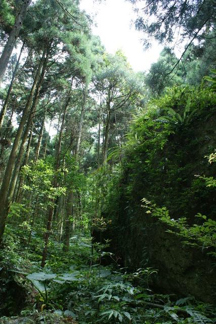 跟著 Mikey 一家去旅行 - 【 關西 】馬武督森林探索樂園