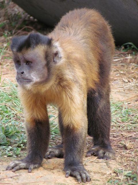 跟著 Mikey 一家去旅行 - 【 關西 】六福村主題遊樂園 - 野生動物區