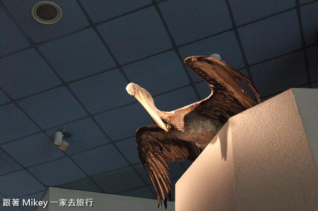 跟著 Mikey 一家去旅行 - 【 台中 】國立自然科學博物館 - 常設展 - 恐龍廳