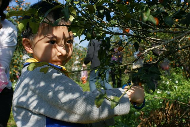 跟著 Mikey 一家去旅行 - 【 礁溪 】宜富金棗觀光果園
