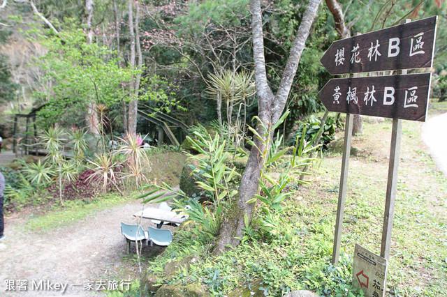 跟著 Mikey 一家去旅行 - 【 復興 】桃源仙谷 - 森林小徑