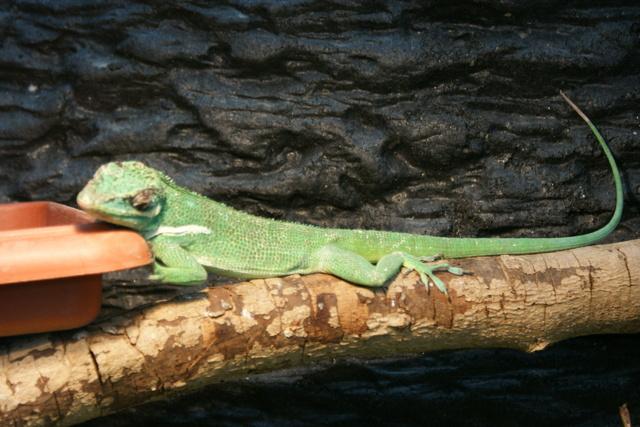 跟著 Mikey 一家去旅行 - 【 北埔 】綠世界生態農場