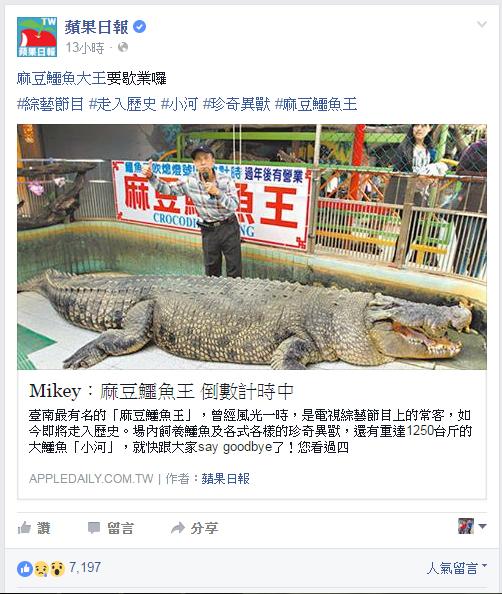 跟著 Mikey 一家去旅行 - 【 媒體露出 】爽報 - 部落夯客 - 『 麻豆鱷魚王 倒數計時中 』