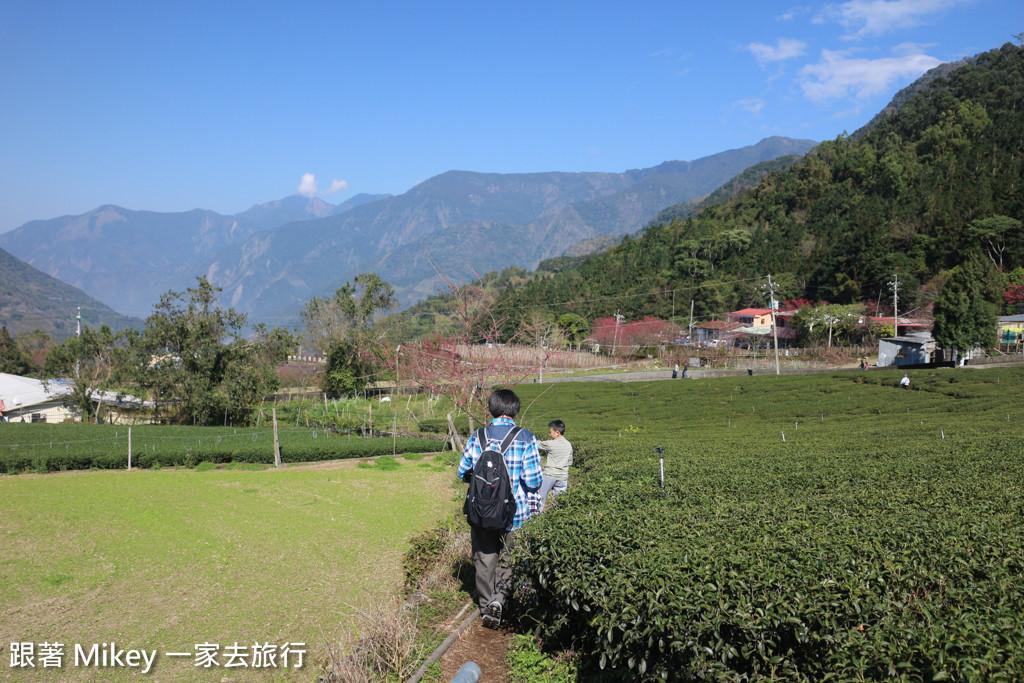 跟著 Mikey 一家去旅行 - 【 信義 】草坪頭玉山觀光茶園
