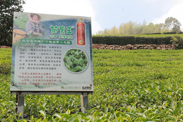 跟著 Mikey 一家去旅行 - 【 嘉義 】生力農場 - 茶裏王拍攝地